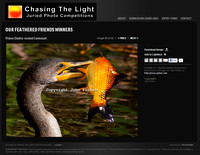Chasing the Light | Competition